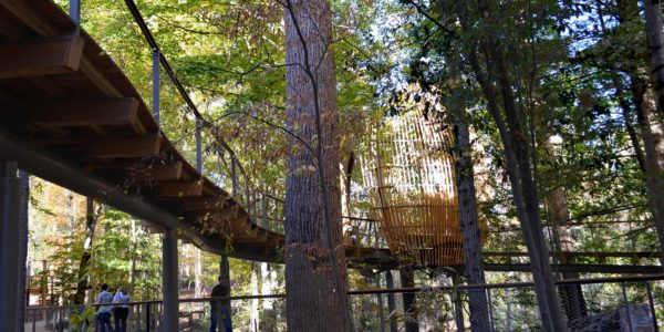 Fernbank WildWoods, Van Winkle Construction, Perkins + Will, Sylvatica, Museum in Atlanta, GA, Canopy